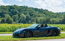 Boxster GTS in Sunflowers